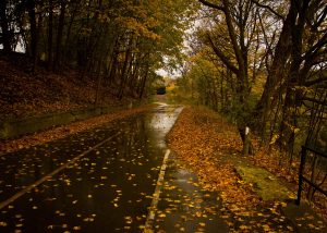 Slip and Fall Injuries from Wet Leaves